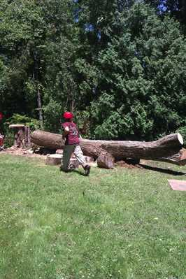 After felling trunk of large Hickory tree.
