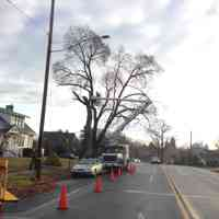 Norway Maple tree removal.
