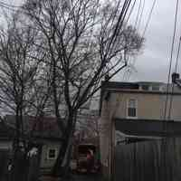Clearing a Norway Maple from a building and utility lines in a tight spot.