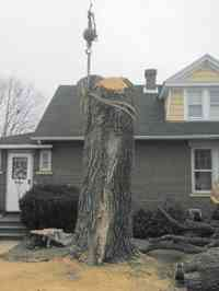 During the removal of a large Siberian Elm tree with a crane