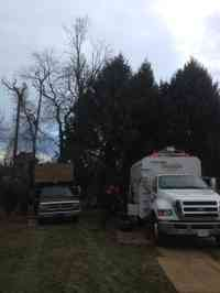 Before the removal of a dead Pignut Hickory tree in a hard to reach area.