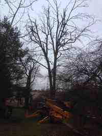 Before using an all terrain lift to remove a dead Pignut Hickory tree in a hard to reach area.