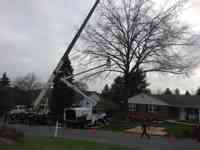Removal of a Pin Oak tree.