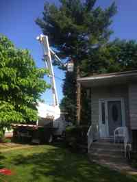 Removal of a White Pine tree.