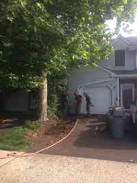 Installing root barrier to prevent damage to driveway from Sycamore tree.