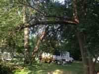Cleaning up a storm damaged Mulberry tree.